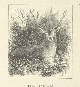 Majestic deer are always majestic with or without added Thranduil.
