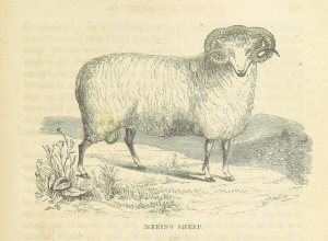 This artist might have seen a sheep once. Maybe.