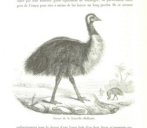 Here's an emu. Something, something Straya.
