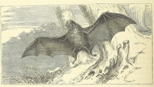 Its relatively easy to find ye olde DRM free pics of bats, not so easy for Superman.