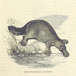 Hopes of being published, more believable than a platypus.